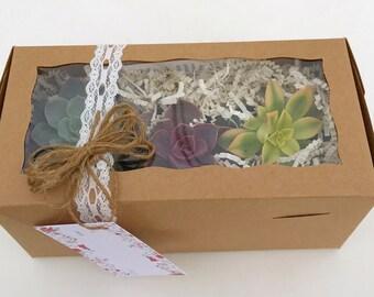 Succulent Gift Box (3)