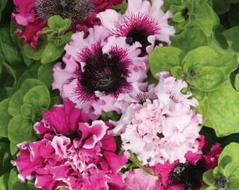 "Petunia Grandiflora 'Superbissima' Mixed Colours / 4"" to 6"" Blooms"