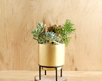 Stand By Me Brass Planter - Succulent Cacti Mid Century Indoor Gold Pot