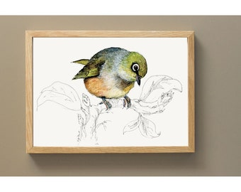 New Zealand native bird Silvereye (or Wax-eye), illustrated Large print, from original watercolor and ink painting artwork, Wild life art