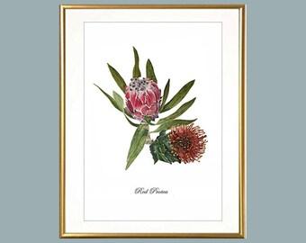 Protea Botanical