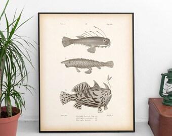 Antique print, Fish wall art, Vintage fish print, Nautical wall art, Fish printable, Instant download print, Art print, 8x10, 11x14, JPG