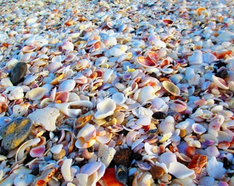 Sea Shells Photo Print, Shells, beach shells, Englewood beach, Fine art photo print, beach, beach art, beach life, Florida