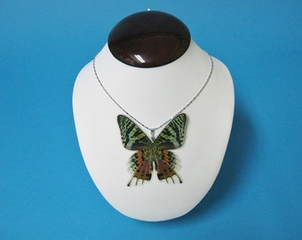 Whole Butterfly Necklace - Urania ripheus
