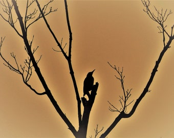 "Pond House Birds Silhouette Greeting Card- ""Pondering"""