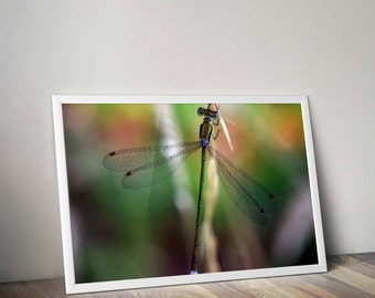 Original macro photograph of a dragonfly taken in corsican digital download