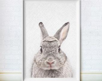 Rabbit Wall Decor, Bunny Print, Woodlands Nursery Art, Printable Baby Animal Poster, Colour Bunny, Digital Download