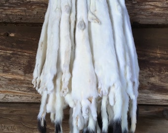 Tanned Long Tailed Weasel Pelts Real Fur Taxidermy Log Cabin Decor