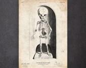 Macabre child birth gift Human anatomy print Macabre oddities art Baby skeleton print CA077