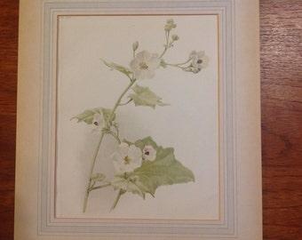 Antique 1895 original floral photolithograph