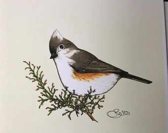 Tufted Titmouse, Leccia Art Studio