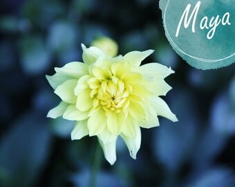 Digital photography Download, Picture photo, Digital download , Photo of a yellow flower, Digital Photo, photograph printable