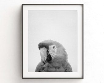 Parrot print wall art black and white photo digital download home decor printable art nursery decor animal print minimalist bird canvas