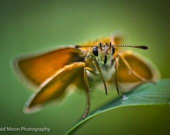 Hummingbird Moth taking a break