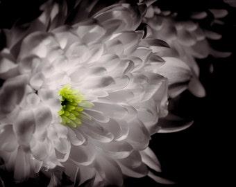 Beautiful White and Yellow Flower Original Photo Print, Amazing Wall Art.