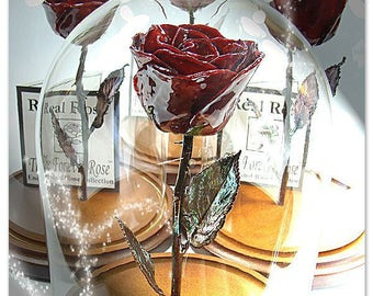 Forever Rose - The Beauty and the Beast Rose - Enchanted Rose - This is a Real Burgundy Rose preserved to last FOREVER!