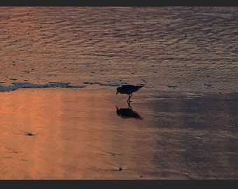 Original photography canvas beach, ocean, bird