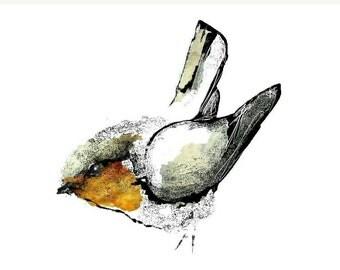 Watercolour Ink Robin Bird Print