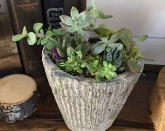 Succulents! Local pickup and delivery only!*** beautiful rustic succulent planter