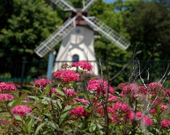 Photograph of soft focused windmill behind focused pink flowers in Alpine type village in North Georgia mountains