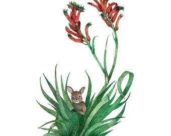 Kangaroo Paw Print