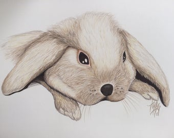 Floppy Eared Bunny Colored Pencil