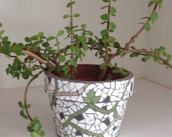 Pot for plants