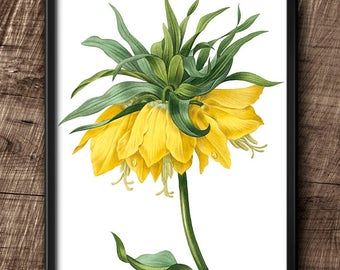 Fritillaria Imperialis  · 8x10 · Instant Download · Flower · Vintage · Wall · Printable · Digital File #53