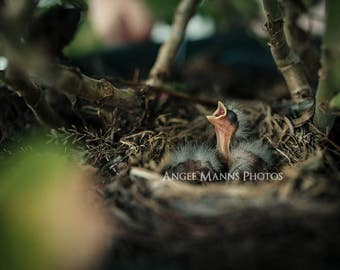 Nature Photography, Baby Bird Photograph, Rustic Home Decor