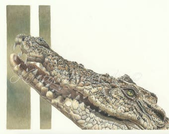 Crocodile Wildlife High Quality Print Drawing Coloured Pencil