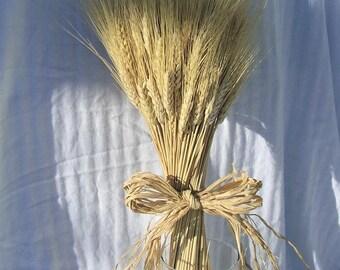 8 oz Blonde Wheat | 60 Stems Wheat | Wheat Bunches | Wedding Decor | Wheat Bouquet