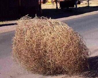 Large Tumbleweed | Dried Plant | Tumbleweeds