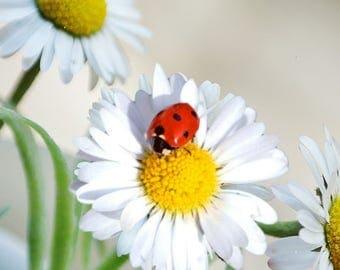 Daisy Ladybug Journal