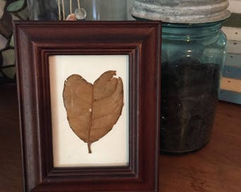 Framed heart shape leaf