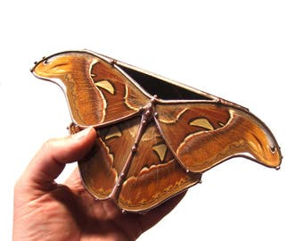 Glass Jewelry Box with Huge Real Atlas Moth - Handmade Stained Glass Reliquary