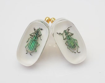 White lucite cufflinks with real iridescent green beetles