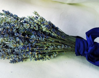 8 Fancy  English Lavender Bouquets with Hand Tied Ribbon in a Love Knot
