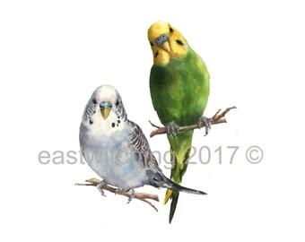 Watercolor Budgie Painting, Budgie portrait, watercolor pet portrait