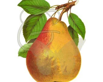 Pear Clip Art Image Download Artwork Image Fruit Printable Crafting Illustration
