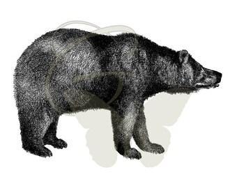 Bear Transfer Drawing Download Illustration Printable Clip Art Digital Artwork