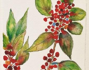 Holly Berries, red berries, ORIGINAL 5 x 7, watercolor and ink