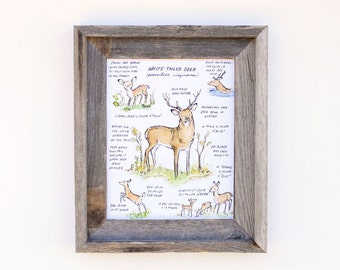 Children's Art  -- Woodland Guide White Tailed Deer -- Archival Art Print
