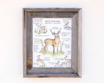 Children's Art  -- Woodland Guide White Tailed Deer -- Archival Art Print