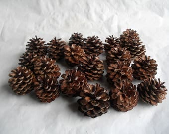 20 Pine Cones Mini for your crafting and decorating Pinecones