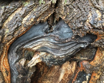 Nature photograph wall art, abstract photo of tree trunk by Carey Primeau Photography.