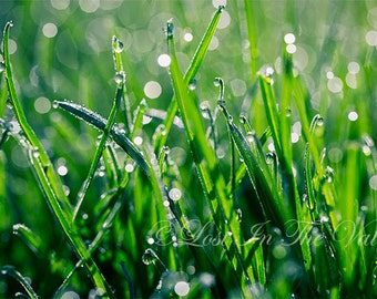 Nature Photograph, Photo of Dew, Wall Decor, Fine Art Photography, Green Grass, Print of Rain, Spring Picture, Bokeh, Raindrops, Morning