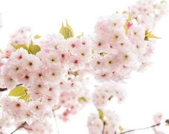 Paris Photography, Pink Heaven in Paris, Pink Cherry Blossoms, Paris Art, Photograph, Nature, Paris Home Decor, Blush Pink, April in Paris
