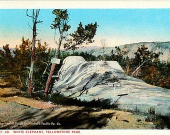 Yellowstone National Park Vintage Postcard - White Elephant Back Terrace (Unused)