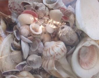 Craft supplies, bag o shells, fine junk, art supplies