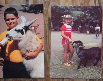 70's CATSKILL GAME FARM 5 Postcards Vintage Dead Stock Unused